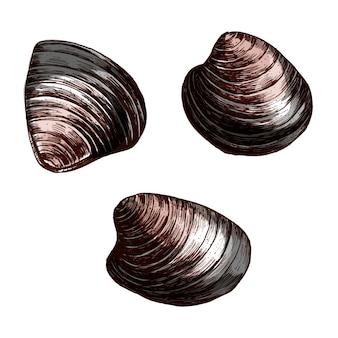 Рисованный моллюск моллюсков моллюсков