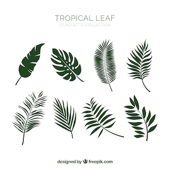 Hand drawn classic tropical leaf collection