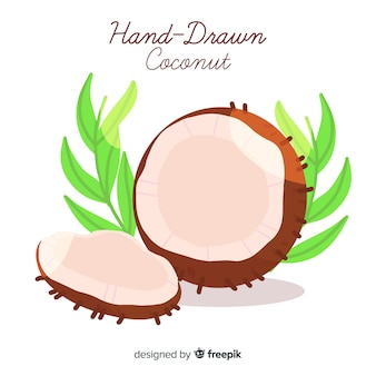 Hand drawn coconut illustration
