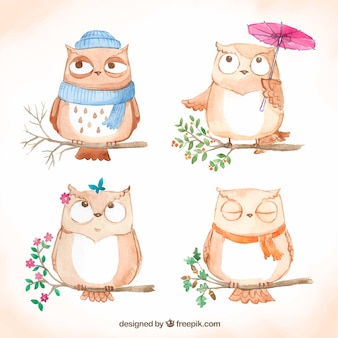 Hand drawn collection of cartoon owls