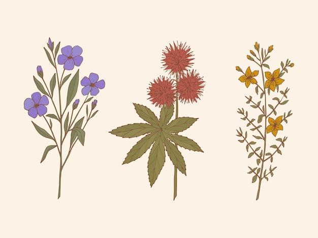 약용 식물의 손으로 그린 컬렉션