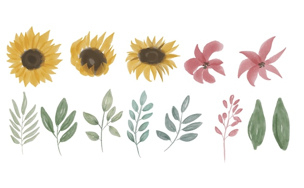 Hand drawn collection of sunflower elements