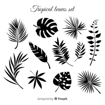 Hand drawn collection of tropical leaves