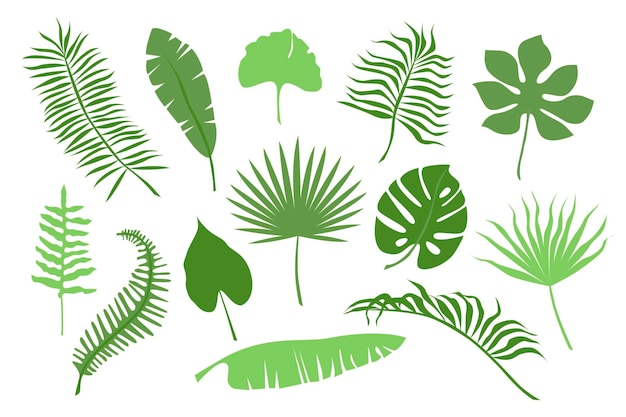 Hand drawn color branches of tropical plants leaves isolated on white background. silhouette flat vector illustration. design for pattern, logo, template, banner, posters, invitation, greeting card