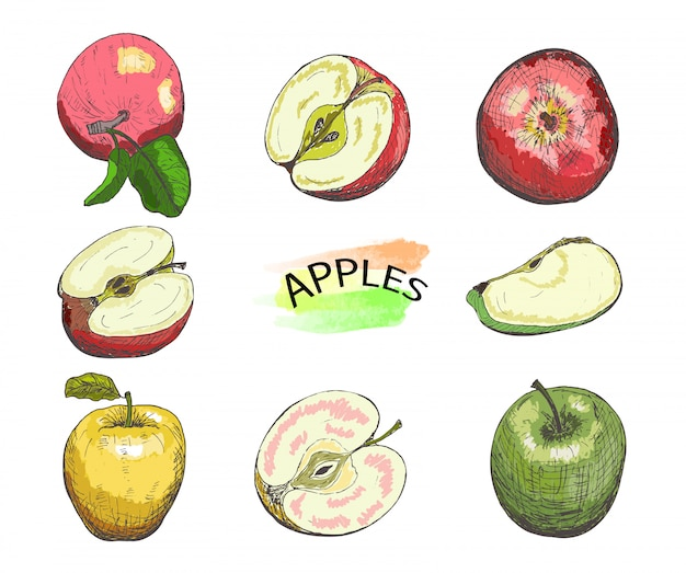 Hand drawn colored apples set isolated on white background