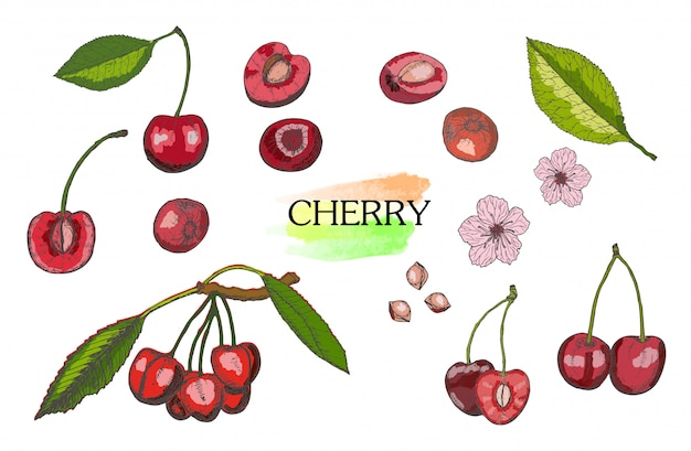 Hand drawn colored cherry set isolated on white background.