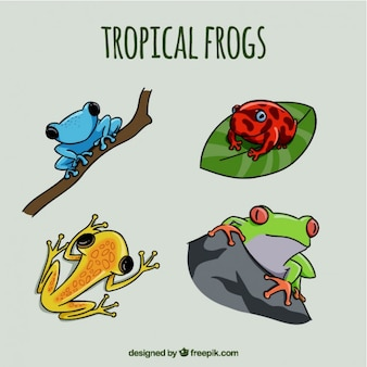 Hand drawn colored frogs