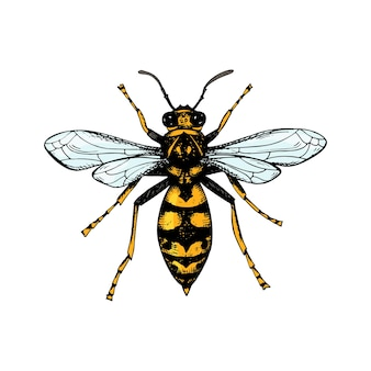 Hand drawn colored wasp