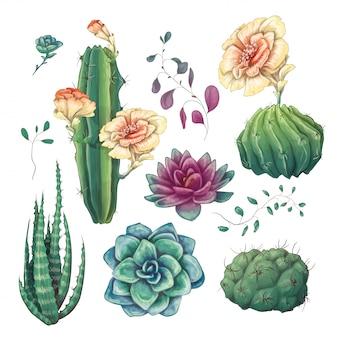 手描きのカラフルなサボテンと多肉植物セット。