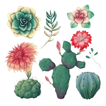 Hand drawn colorful cactuses and succulent set.