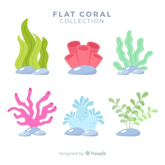 Hand drawn colorful coral collection