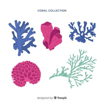 Hand drawn colorful coral pack