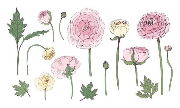 손으로 그린 화려한 꽃 요소 집합입니다. 핑크 미나리 아재 비 꽃으로 컬렉션입니다.