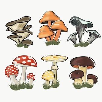 손으로 그린 화려한 버섯 컬렉션. 흰색 절연 평면 디자인에 삽화의 큰 버섯 세트.