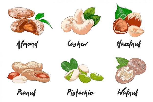 手描きのカラフルなナッツのスケッチ
