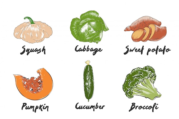 Hand drawn colorful vegetable sketches