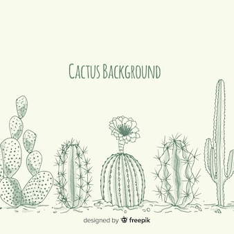 Hand drawn colorless cactus background