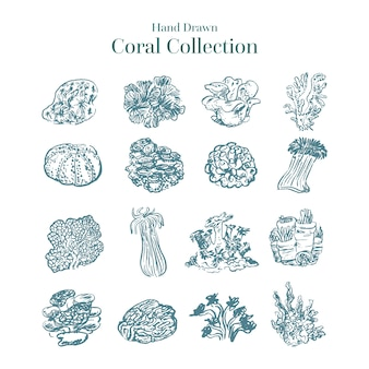 Hand drawn colorless coral collection