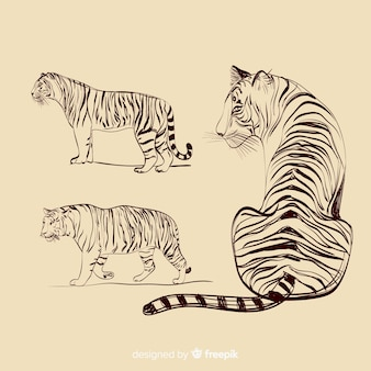 Hand drawn colorless tiger collection