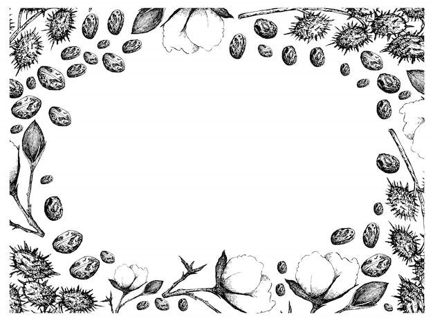 Hand drawn of cotton flowers with buds and castor beans