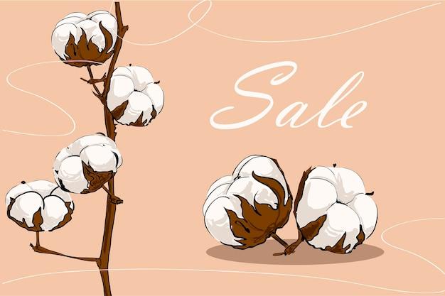 手描き綿植物販売イラスト