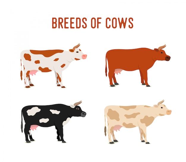 手描きの牛の品種セット