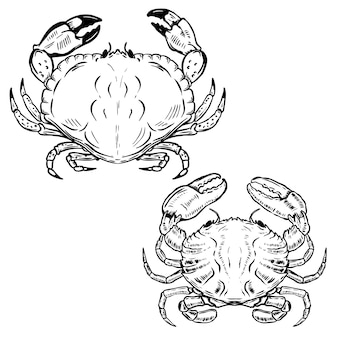 Hand drawn crabs  on white background.  elements for poster, emblem, sign, seafood restaurant menu.  illustration