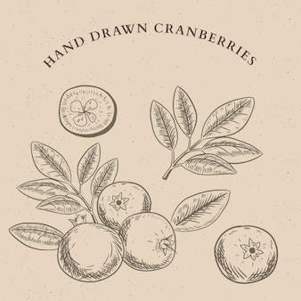Hand drawn cranberries set