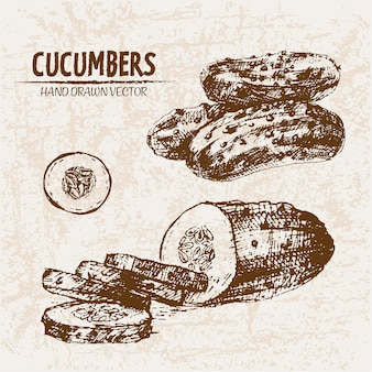 Hand drawn cucumber