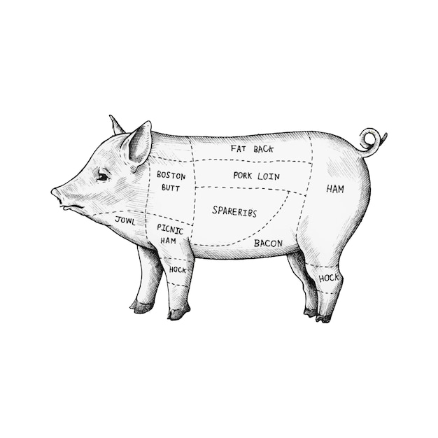 豚の手で描かれたカット