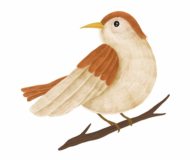 Hand-drawn cute brown sparrow on a tree branch