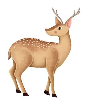 Hand-drawn cute fallow deer