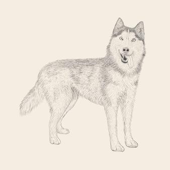 Hand drawn cute husky dog vector illustration