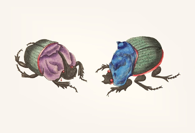 Hand drawn of cyanean beetles bowing to each other