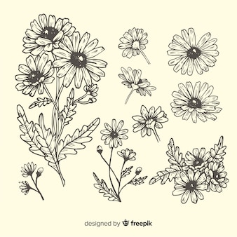 Hand drawn daisies sketches collection