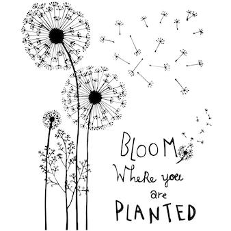 Hand drawn dandelion flowers