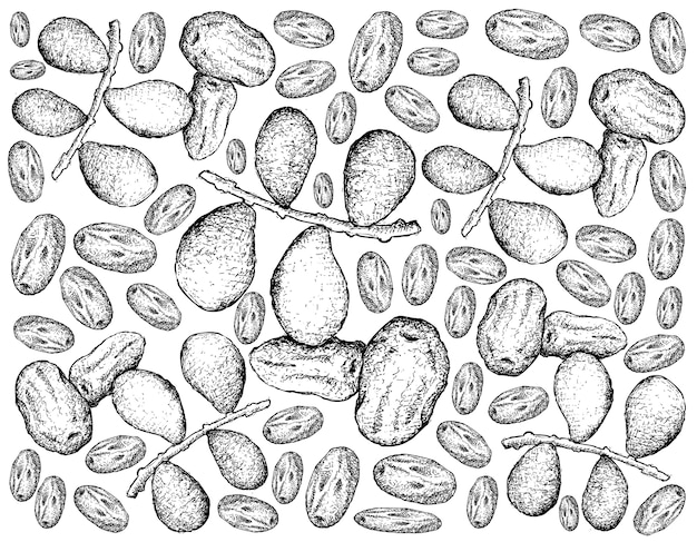 Hand drawn of dates fruits on white background