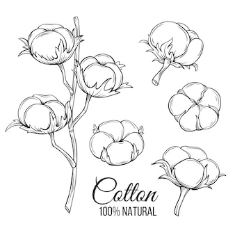 Hand drawn decorative cotton flowers
