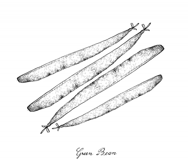 Hand drawn of delicious fresh green beans
