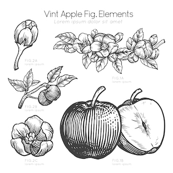 Hand drawn description of apple and apple flowers