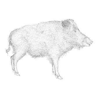 Hand drawn design of pig illustration
