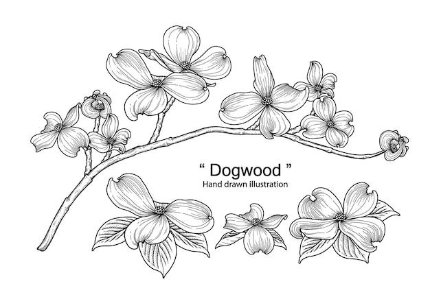 Hand drawn dogwood flower set isolated on white background.