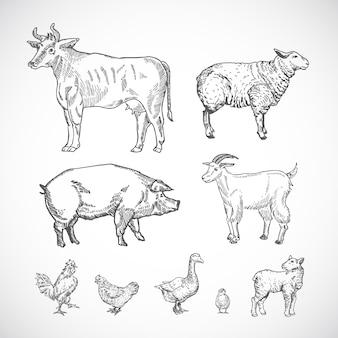 豚、牛、山羊、子羊、鳥の手描きの家畜コレクションシルエットスケッチ図面セット。