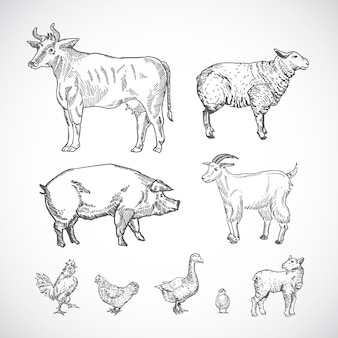 Hand drawn domestic animals collection of pig, cow, goat, lamb and birds sketch silhouettes drawings set.