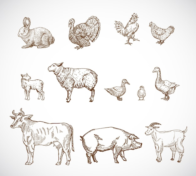 Hand drawn domestic animals set.