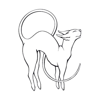 Hand drawn doodle of stretching sphinx cat with a long curled tail vector illustration