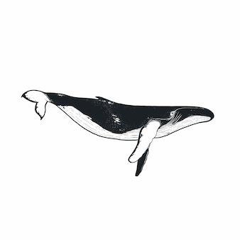 Hand drawn doodle whale