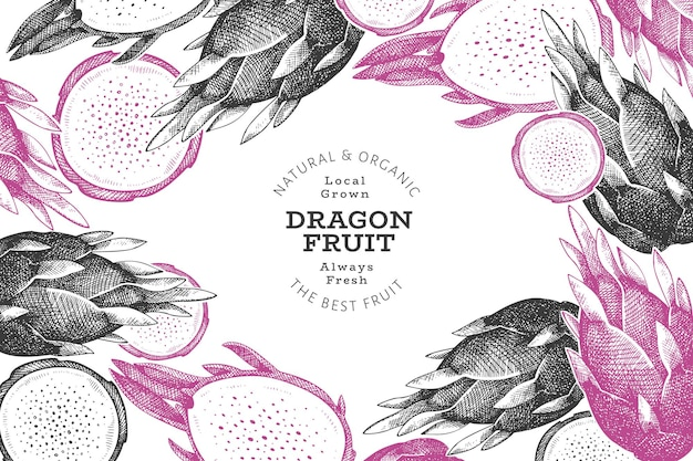 Hand drawn dragon fruit  template. organic fresh food  illustration. retro pitaya fruit .