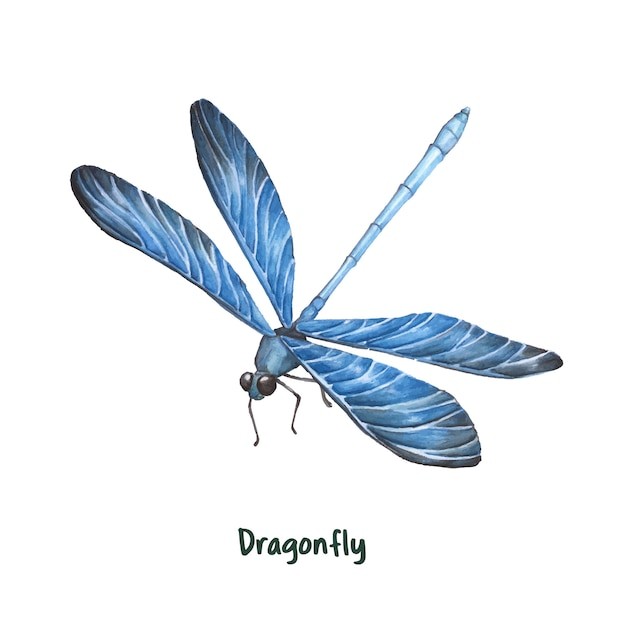 dragonfly vectors photos and psd files free download rh freepik com dragonfly vector free download dragonfly vector format