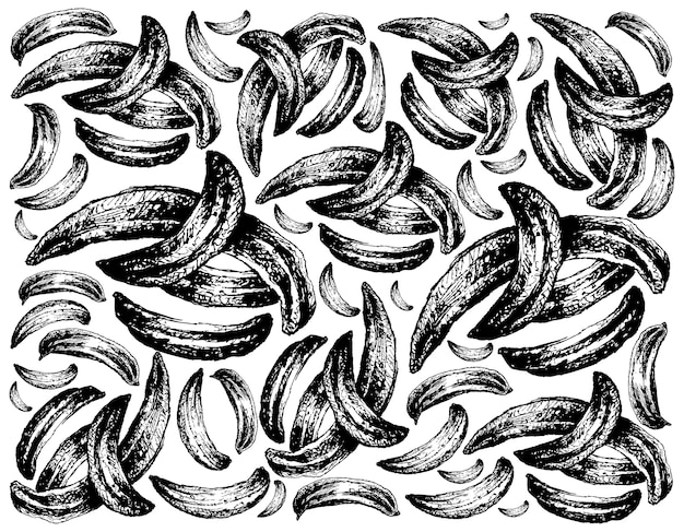 Hand drawn of dried caraway on white background
